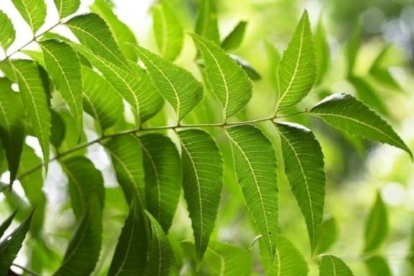 5 loại thảo dược trị tiểu đường có sẵn trong vườn nhà, ai cũng nên biết